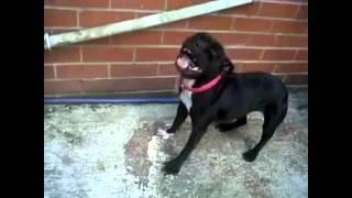 Смешные собаки чихают — смотрите забавные видео ролики с животными на сайте Rutube