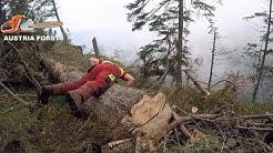 Holzarbeiten im extremen Steilhang  Ohne Seilwinden Unterstützung geht nichts mehr