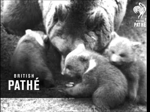 Baby Bears (1941)