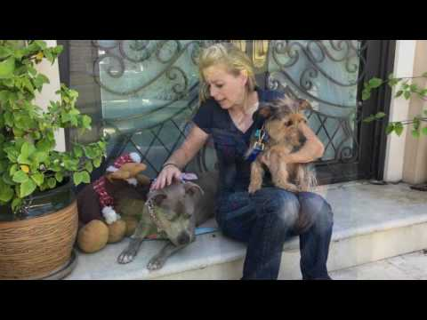 Romeo & Juliet - Adorable Pair of Dogs Need Home