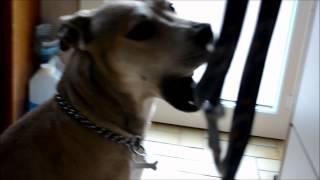 Ashley Hart - La vie d'un chien heureux.