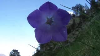 Keyla - Tak Mampu Setia (video SUNRISE N SUNSET)