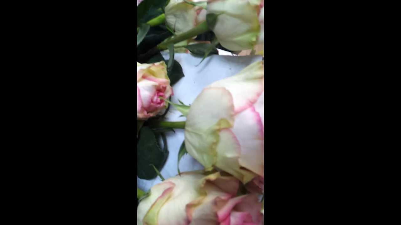 esperance rose youtube