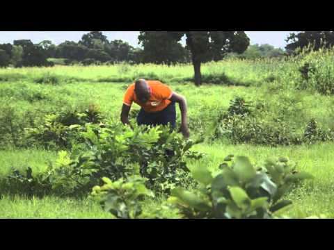 How to do FMNR - Pruning for natural regeneration