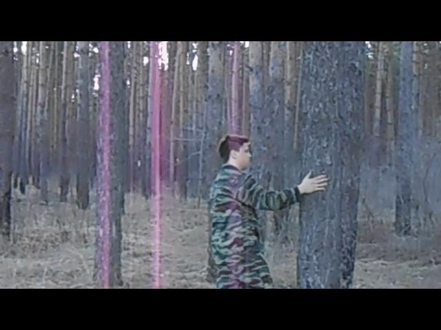 Изображение предпросмотра прочтения – ЛюдмилаВолкова представляет видеоролик кпроизведению «Шуми, шуми зеленый лес» (Никитин Иван)