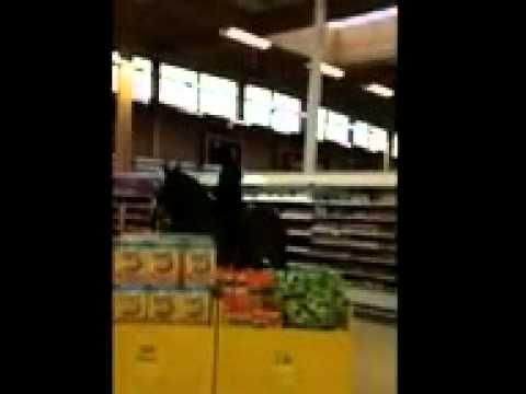 "Woman rides horse through Tesco in latest 'neknomination' stunt"""