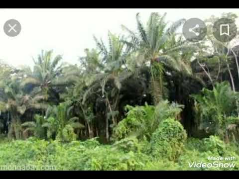 palm oil  crop 8 acres for sale cost 2 crore 40 lakhs