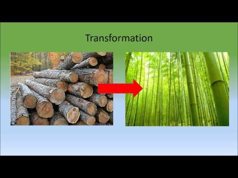 Beyond Engineering  Bamboo Initiative