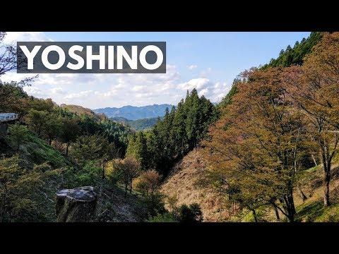 Yoshino Mountain Hike 吉野山   VEDA DAY 10   Japan Vlog 50   Lin Nyunt