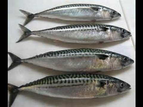 How to make fry mackerel fish youtube for How to cook mackerel fish