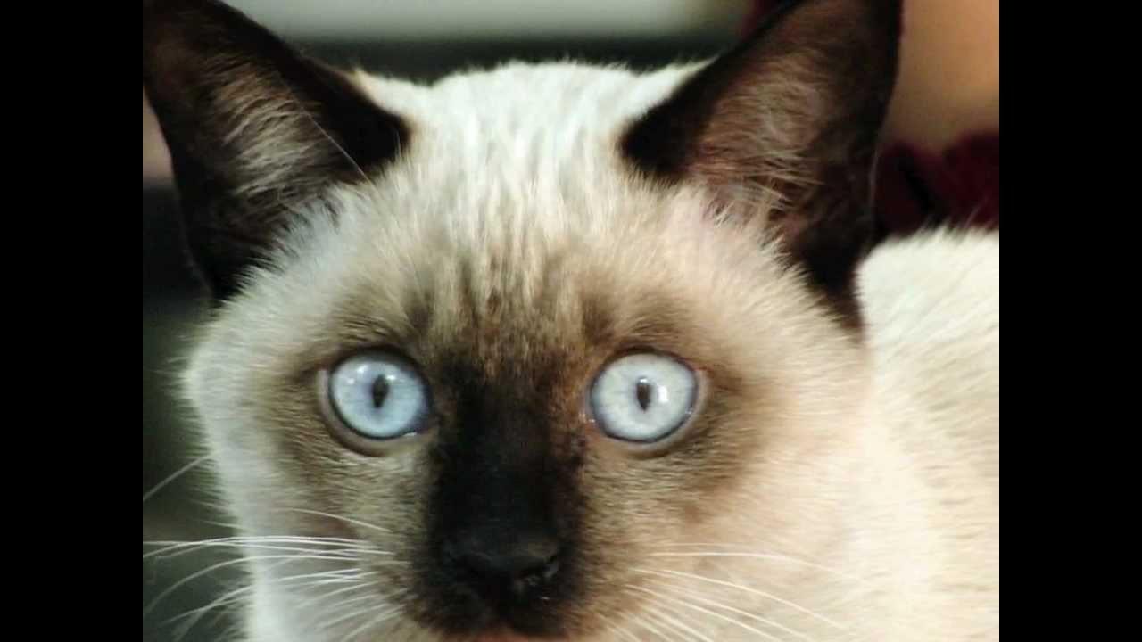 Youtube cat sounds jeux entrainement poker