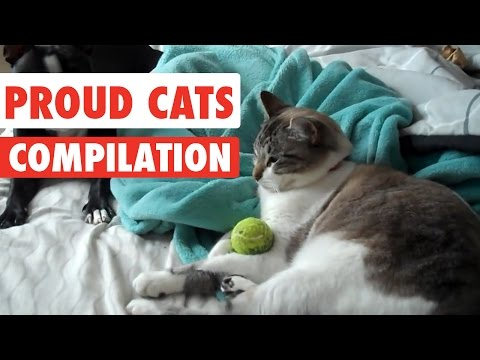 Proud Cats Video Compilation 2017