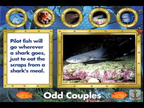 "Undersea Adventure Ocean Tours Part 1: ""Odd Couples"""