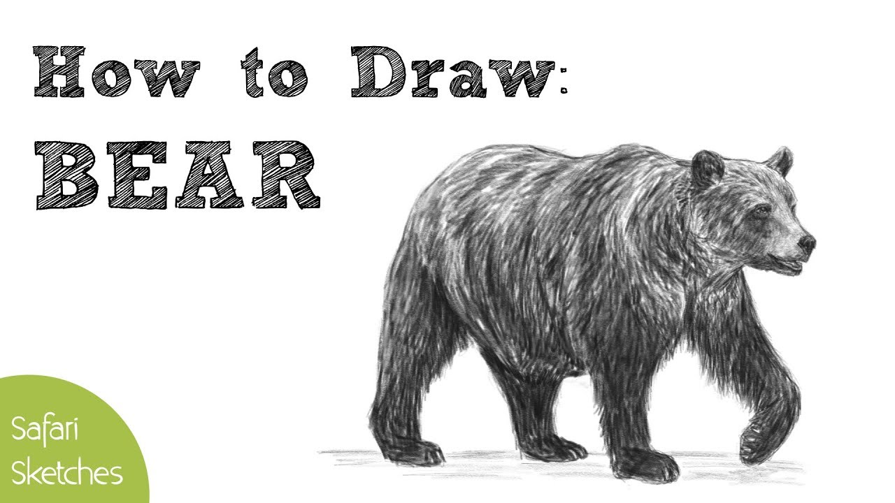 How to Draw a Bear | Realistic, Step by Step | (Grizzly ...