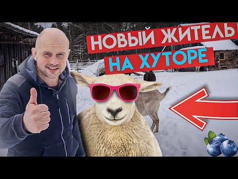 Что выберет Белка : собачий корм или овёс ?Поехали в город покупать новое животное и отвезли посылки