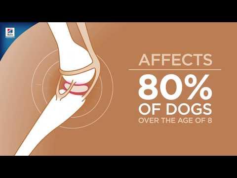 hills-prescription-diet-jd-joint-care-dog-food