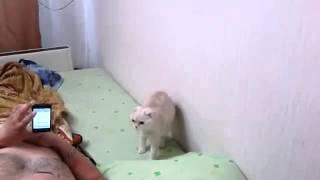 Кошка стоит во время гимна России