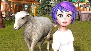 Qingji i Vogel   Kolopucat.tv   Super Song for Children