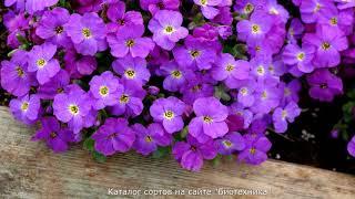 видео Выращивание многолетних садовых цветов из семян