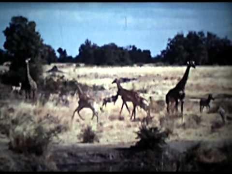 Rhodesia Tour 1974