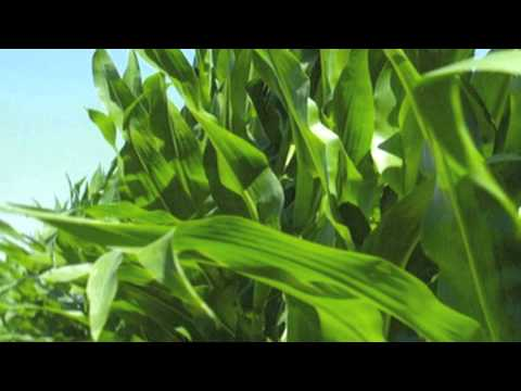 AgriBusiness Insurance, The Thompson Group