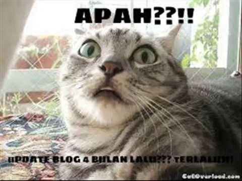 Unduh 64+  Gambar Kucing Garong Lucu Paling Keren HD
