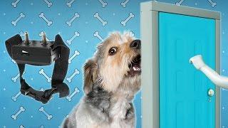 Почему собака лает(Какую собаку Вы имеете — молчаливую или разговорчивую? Почитателей четвероногих можно условно поделить..., 2015-08-24T11:21:10.000Z)