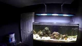 How to hang your Aquarium light
