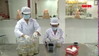 Chuyển giao công nghệ nuôi trồng đông trùng hạ thảo - Báo Tuổi trẻ