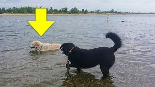 This Dog Saw A Little Animal Adrift In The Waves, And His Instincts Immediately Kicked In