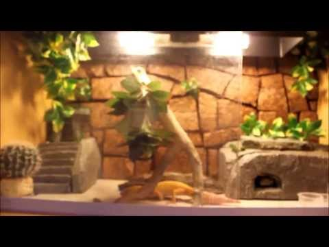 July Reptile Room/Feeding All My Pets