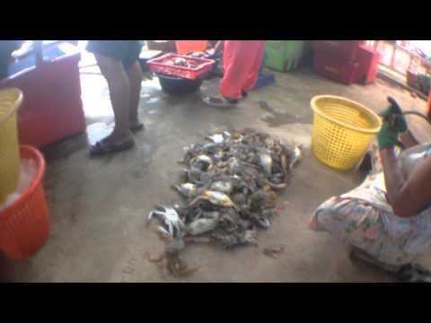 แพปลา เจ้ดวง ของทะเลสดๆ เพียบ หาดบางเบิด by sunitjo