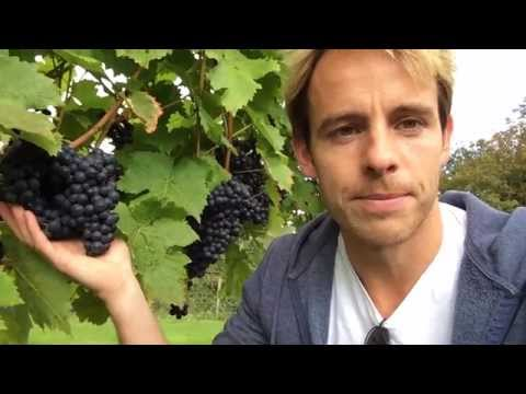Visiting a UK Vineyard