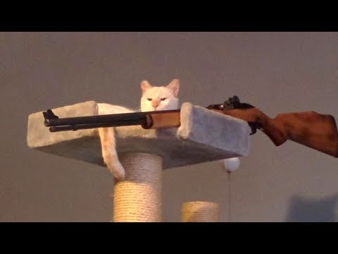 WATCH THIS and EXPERIENCE THE HARDEST LAUGH of your life - FUNNY ANIMAL compilation