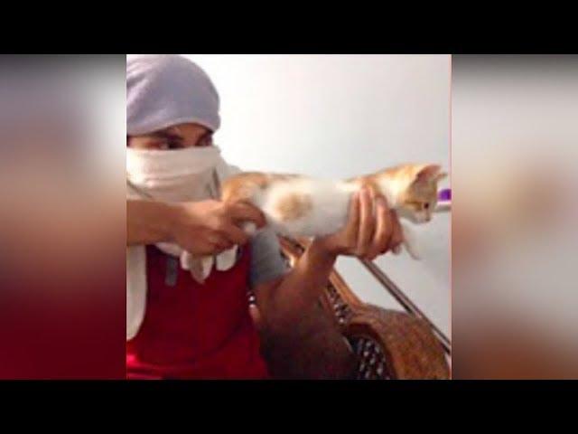اجمل لقطات القطط مضحك جدا #1