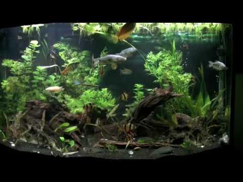 Fishlin Film