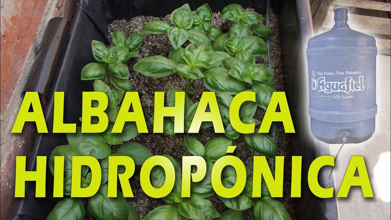 Albahaca hidrop nica youtube for Cultivo de albahaca en interior