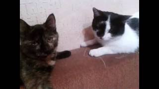 Вымахали бездомные котята (кот и кошка)