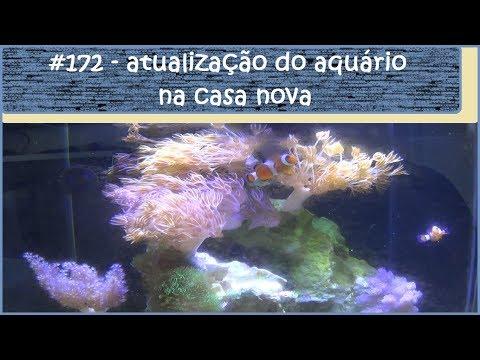 Atualização do aquário na casa nova - #EP172