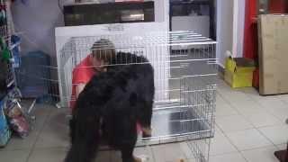 клетка для собак(Клетку для собак можно купить у нас на сайте http://zooelen.ru тут находиться прайс с выгодными оптовыми ценами...., 2015-03-18T21:04:32.000Z)