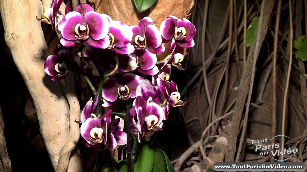 paris exposition mille et une orchid es jardin des plantes full hd youtube. Black Bedroom Furniture Sets. Home Design Ideas