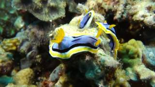 Science Today: Coral Reefs, Rare and Valuable | California Academy of Sciences