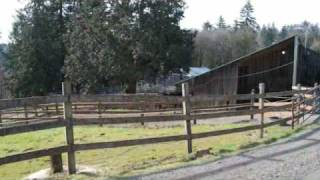 Shadysprings Farm/ A Boarding Facility in Portland, OR