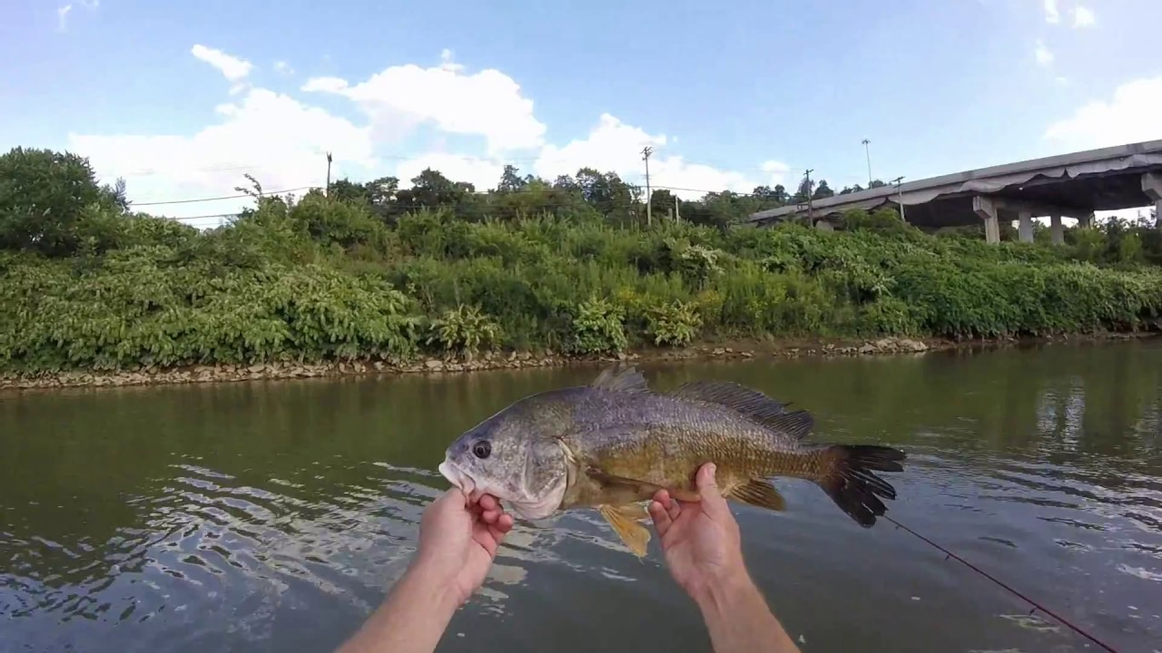 Micro jig fishing at chartiers creek youtube for Small creek fishing