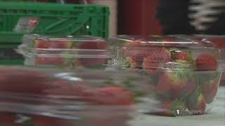 New Zealand strawberry growers urging fruit lovers to keep supporting the local industry