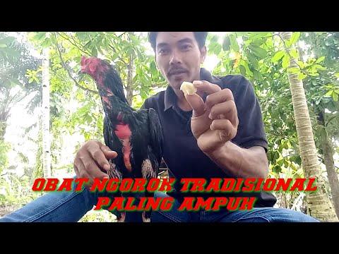 Ramuan ampuh untuk mengobati ayam ngorok hanya dengan bawang merah tanpa campuran apapun. bawang merah adalah....