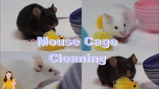 Cleaning my Mouse Cage