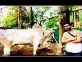Raffi Ahmad Beli Sapi India hingga Sapi Lokal untuk Berkurban - iSeleb 12/08