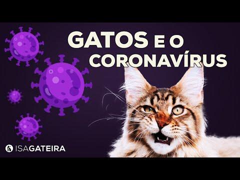 GATOS E CORONAVÍRUS | Dúvidas Sobre A PANDEMIA E Nossos GATOS