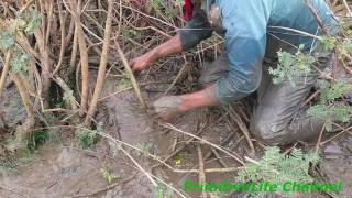 Amazing Fishing Videos in Cambodia - Catch Fish by hand best video for Traditional khmer